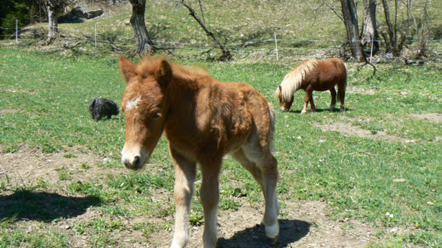 Mini Zoo von Jorasse